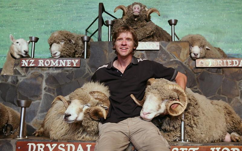 Der Schafskönig