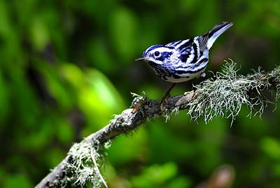High Island Bird Migration 2010