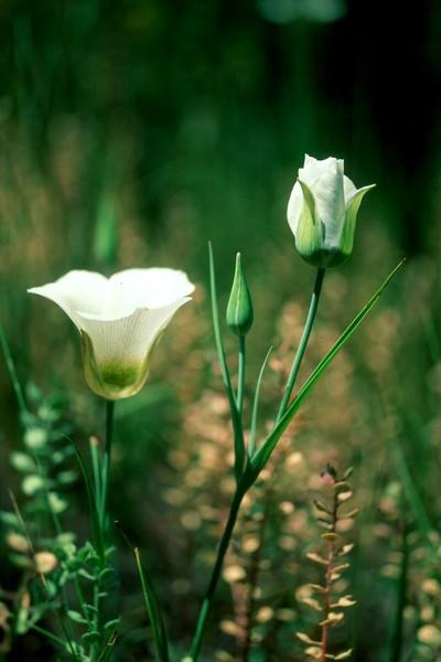 amh FLOWERS (1309).jpg