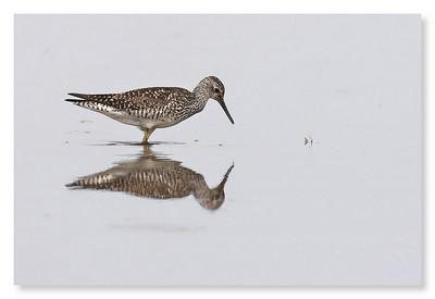 Plum Island Birds