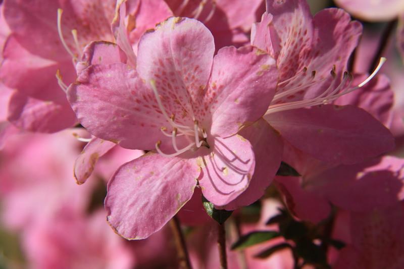 130427_IMG_1786_6321_Blossoms.JPG