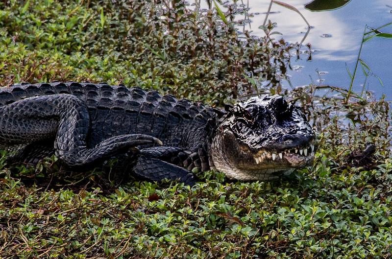 Everglades_068_IMG_0769_Everglades.jpg