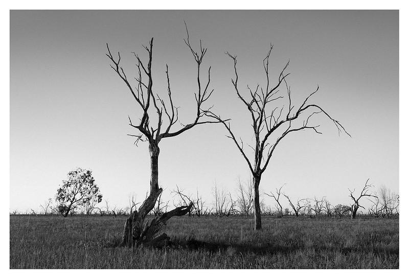Australia051.jpg