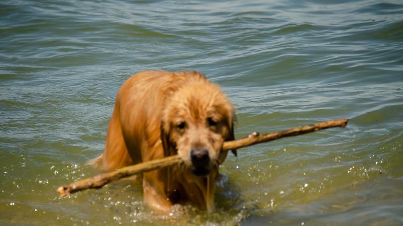 PuppyParty18-262.jpg