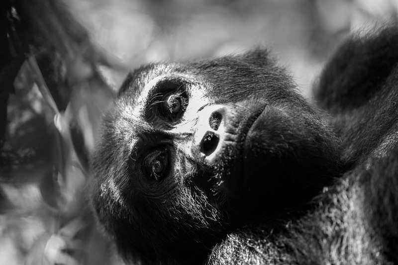 Uganda_T_Gor-1633.jpg