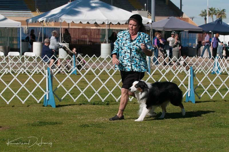 20170205_Australian Shepherds_Lost Dutchman Kennel Club-46.jpg