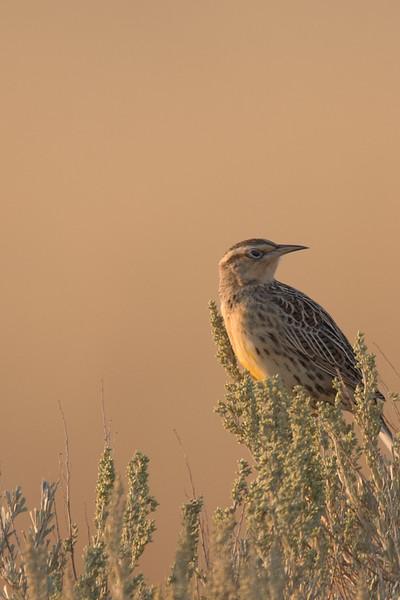 20-Sep CC Trip - Antelope Island -redo-4714.JPG