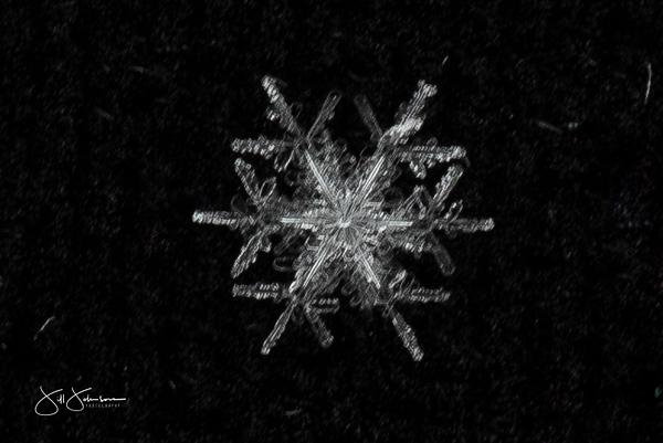 snowflakes-2575.jpg