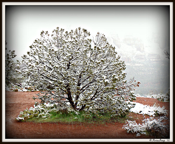 Peacock Tree in a morning snowstorm; Airport Vortex, Sedona