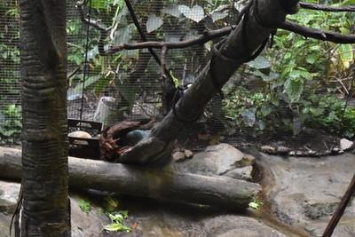 01-17 Pittsburgh Zoo