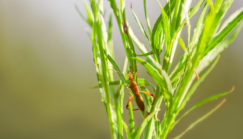 Bugs and Beetles - 136.jpg