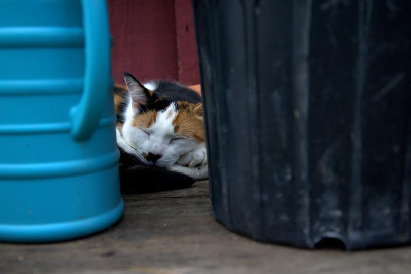 Cat nap Well Sweep.jpg