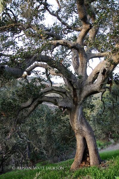 Pismo Preserve Nature Scenes