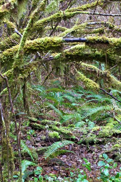 Tualatin Valley Nature Center  4045.jpg