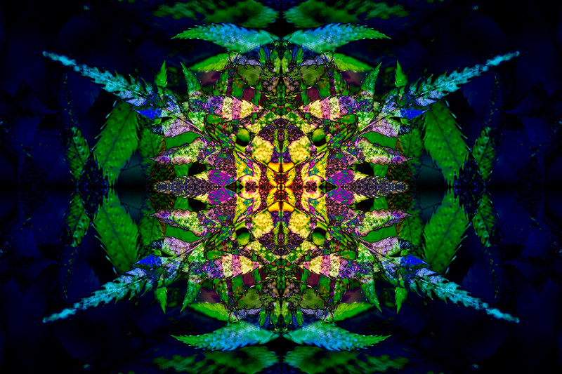 20210118-JAN_7451-mirror-2-6.jpg