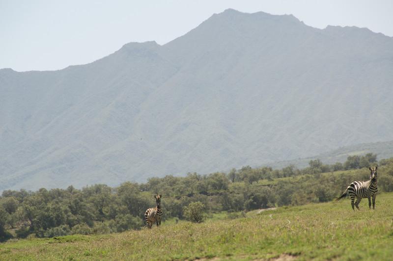 Kenya.Card1.02.2014 315