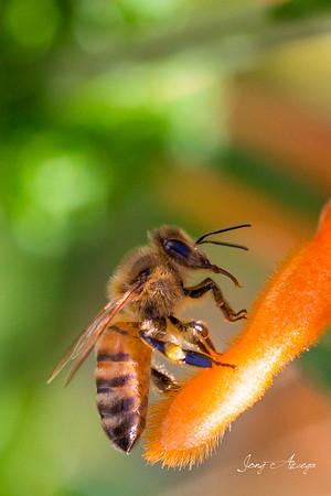 2019 Macro: Bees