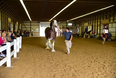 49 583 Champion Mare Clydesdale