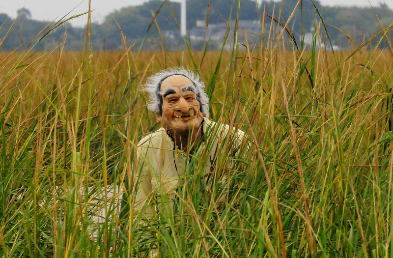 Old Man Grass_2.jpg