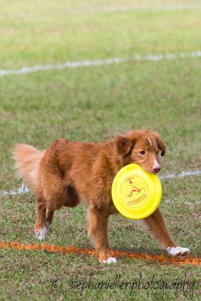 _MG_2853Up_dog_International_2016_StephaniellenPhotography.jpg