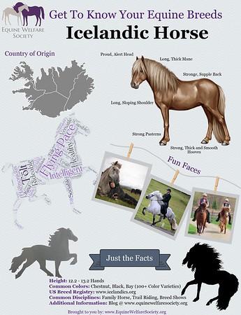 Breed Infographics