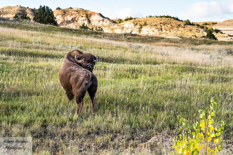 Theodore Roosevelt National Park-758.jpg