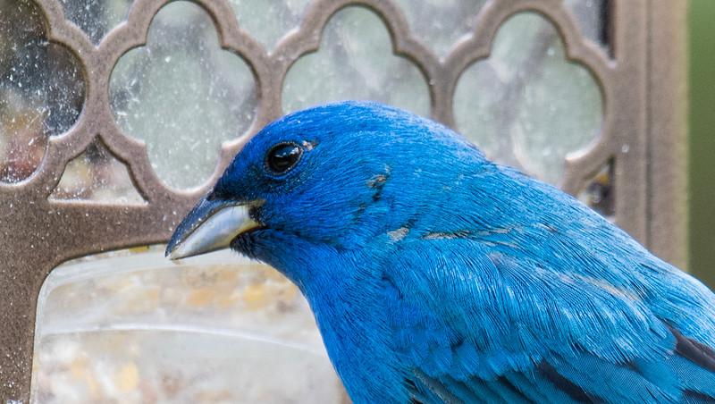 05-10-2019-birds_(6_of_12).jpg