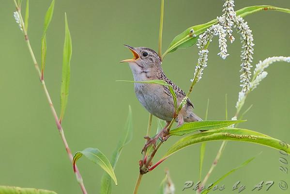 2009-08-23 Riverlands Migratory Bird Sanctuary