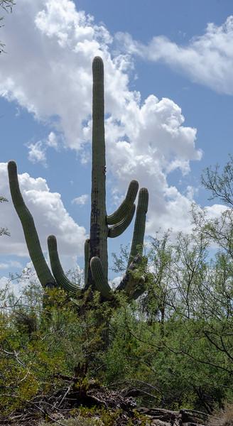 20180902-Saguaro-NP-East-4330.jpg