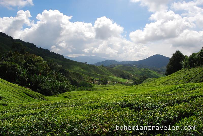 Cameron Highlands Malaysia Tea fields [Boh] (2).jpg