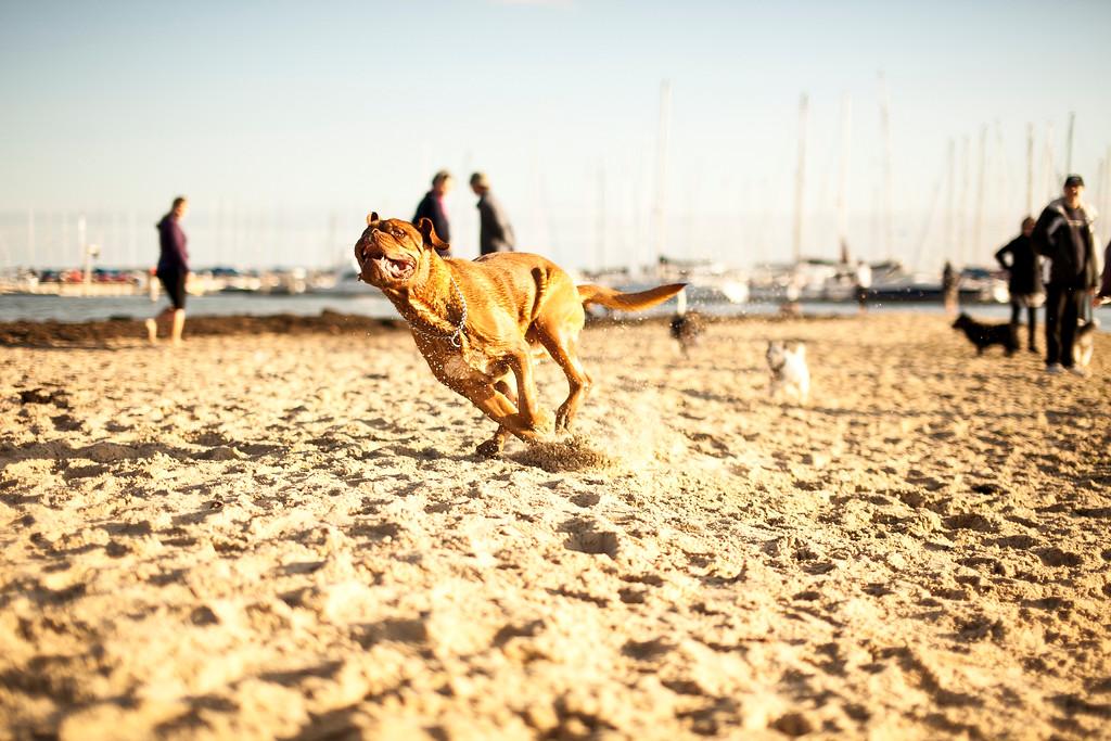Dogsonbeach-AlexanderGardner-0025-20100614