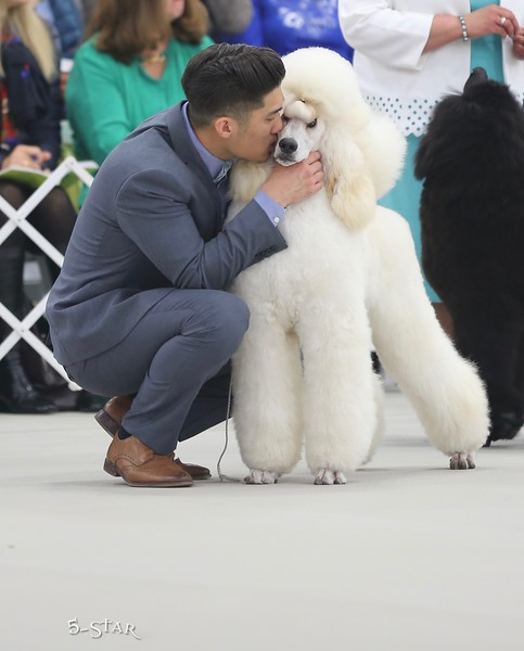 2018 PCA poodle kisses