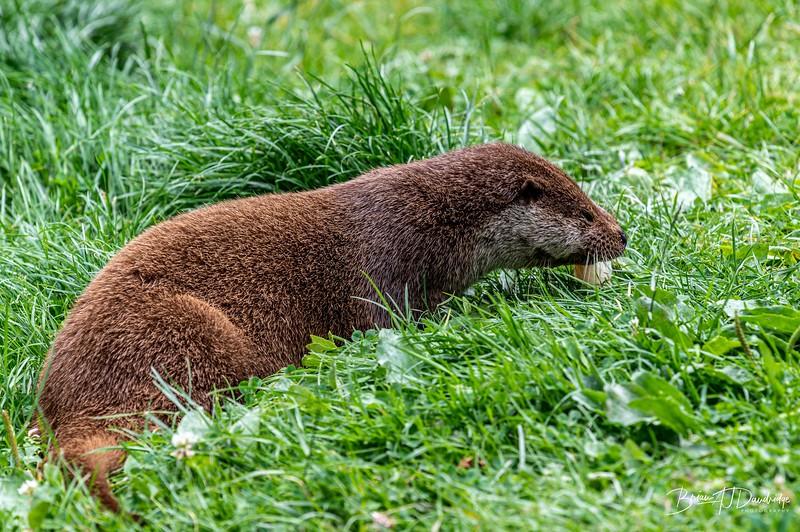 British Wildlife Centre_Z6-7367.jpg
