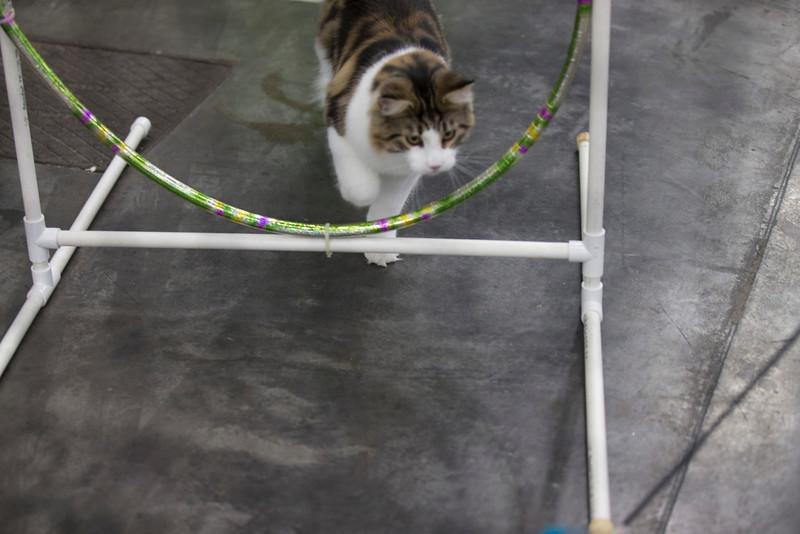 CatShow2014214.jpg