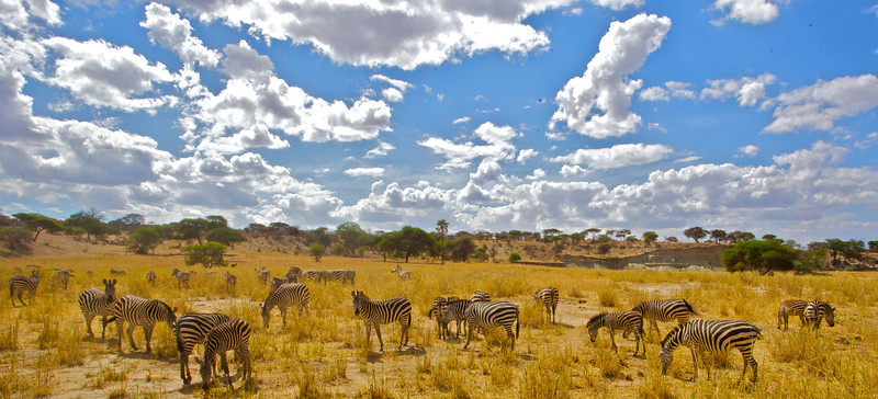 Ngorongoro 20.jpg
