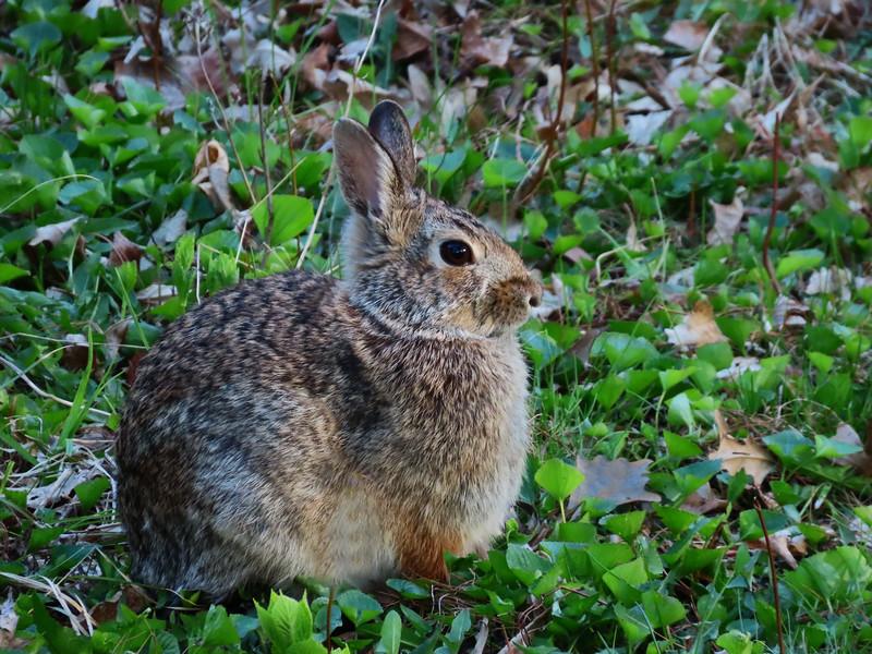 rabbit one.jpg