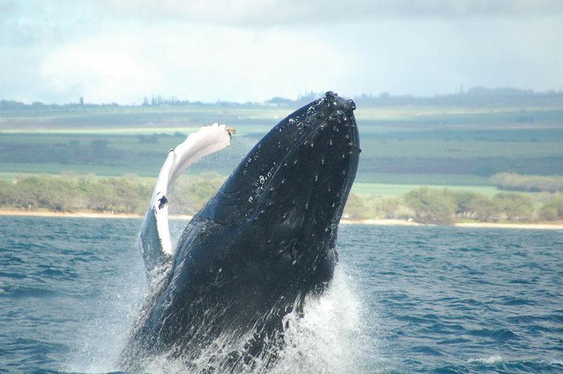 whale best flip.JPG