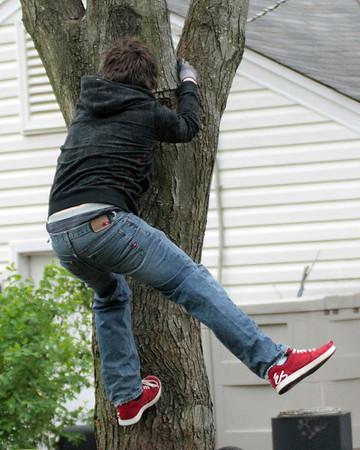 Bray Running Up a Tree - 4.27.2009