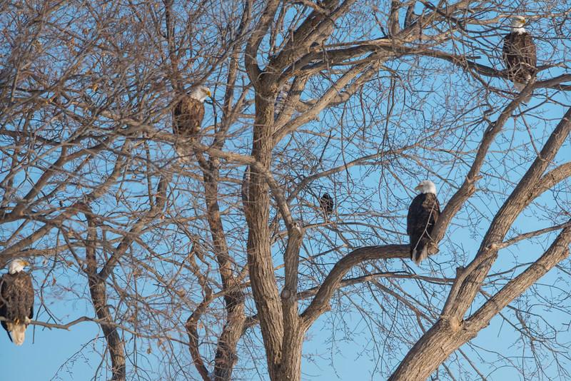 EagleTreeDRM0319LowRes.jpg