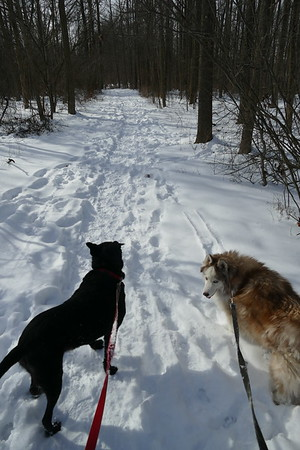 Winter walk with dogs 2-21-2021