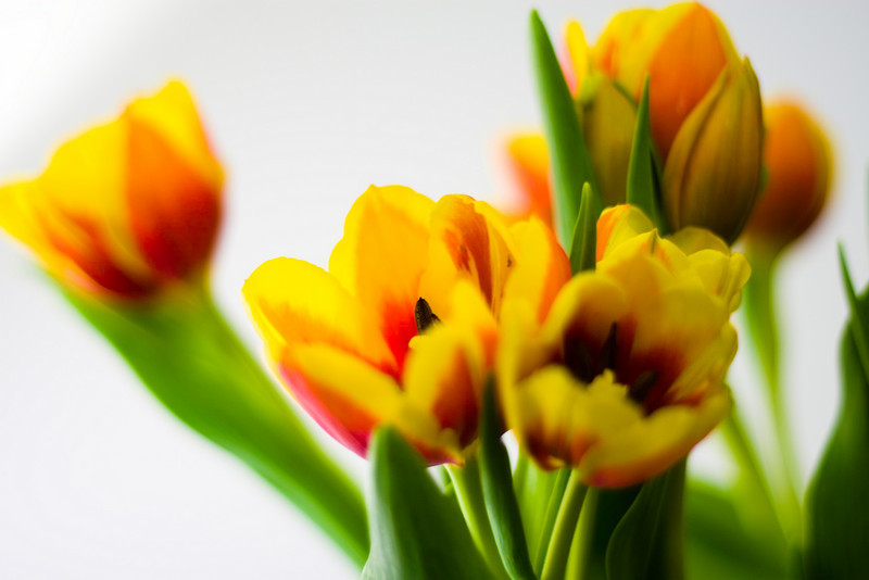 Tulip Light Box_02.jpg