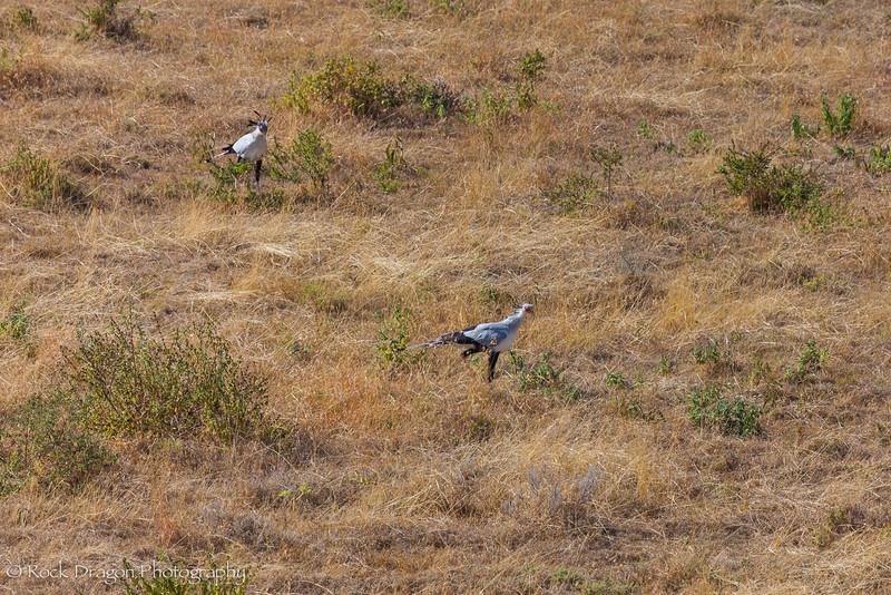 Ngorongoro-2.jpg