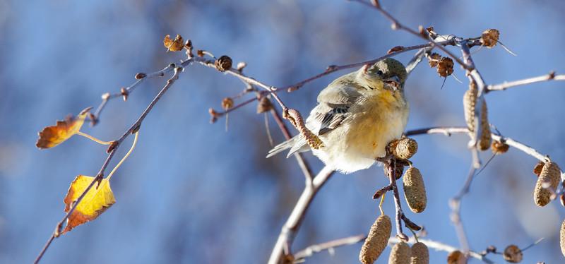 bird-nye-1.jpg