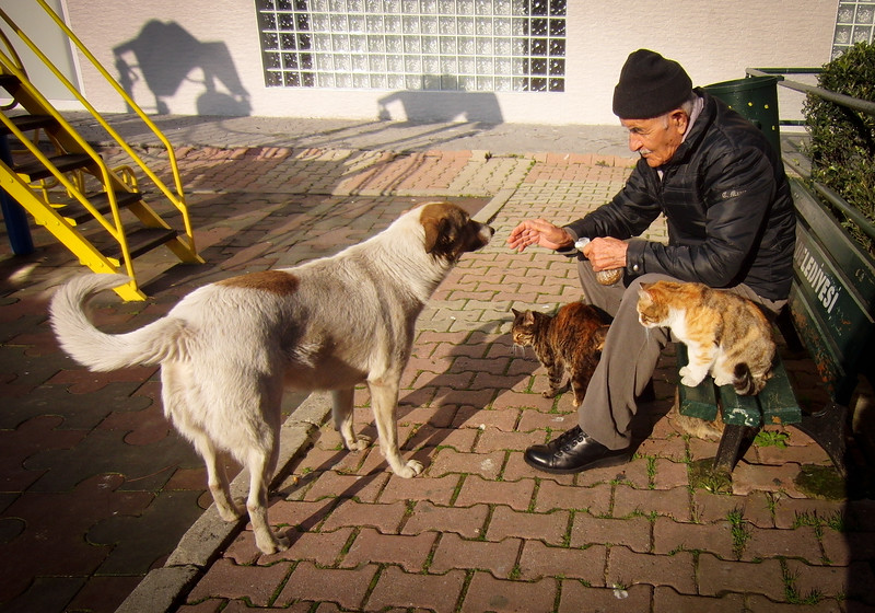 Stray dogs and cats of Istanbul, Turkey