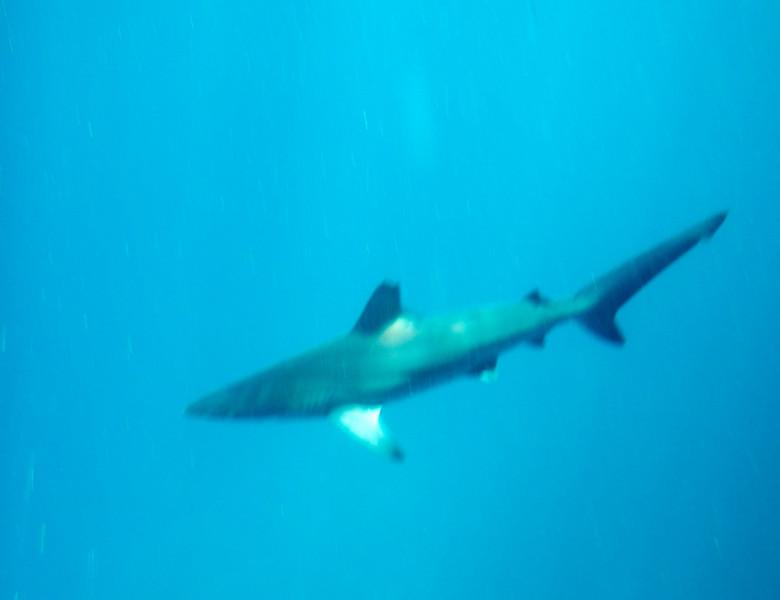 underwater-106.jpg