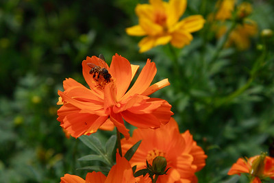 Sentosa Flowers 2007