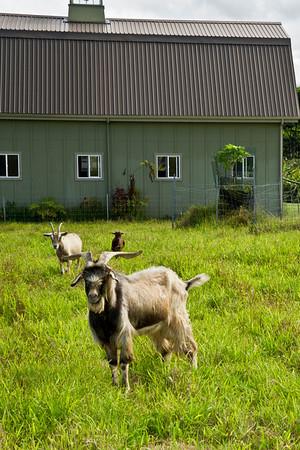 Manalane Farm