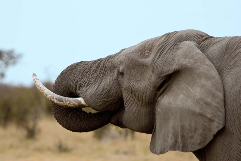 Elephant_edited-1.jpg
