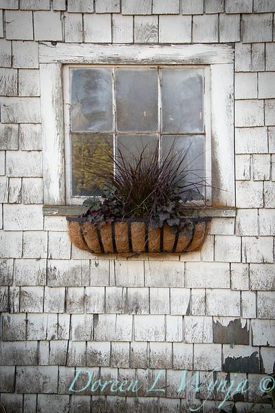 Build a fall window box - How to_7371.jpg