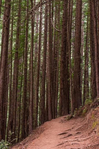 Muir Woods (2013-06-15)